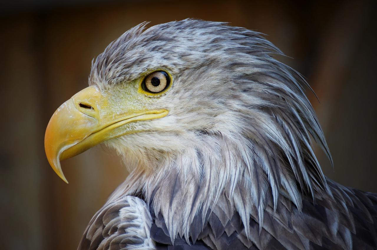spojrzenie orła, albo doświadczone spojrzenie 15 letniego organizmu